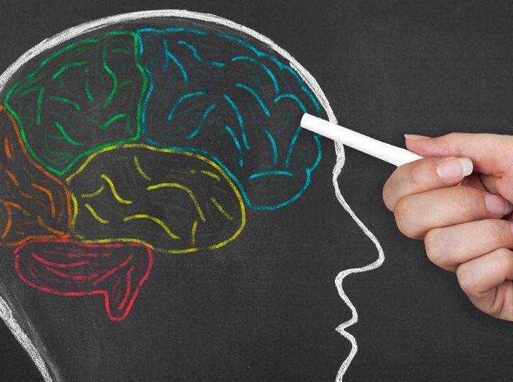 Cerebro dibujado con colores